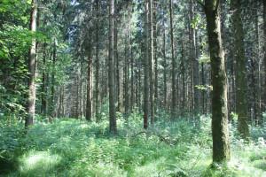Vierecksschanze im Wald Speckhau