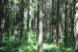 Wald-mit-Grabhügeln-Vierecksschanze-Aßmannshardt