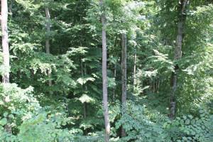 Bäume-am-Abhang-Rinkenburg-Wilhelmsdorf
