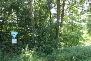 Wald bei Bad Saulgau