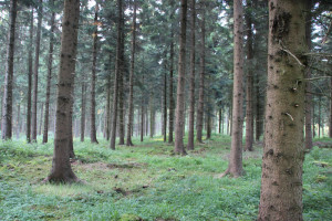 Wald entlang Ostrach Wanderweg