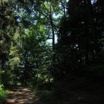 11 Waldweg Deggenhauser Tal
