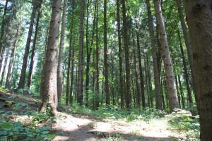 13 Wald am Hoechsten