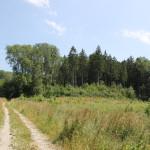 16 Feldweg am Waldesrand Hoechsten