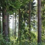 21 Deggenhauser Tal durch Wald