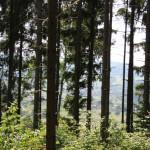 22 Sicht durch Wald auf Deggenhausen