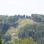 24 Holzabbau Deggenhauser Tal
