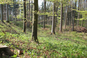 Ebenweiler ehemaliger Burghof