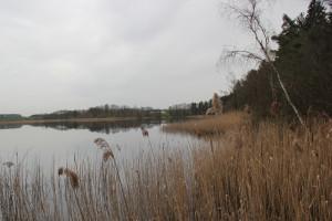 Schilf Schreckensee Naturschutzgebiet