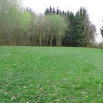 Liegewiese Baggersee Moellenbronn
