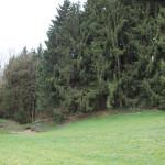 Moosbachwald Kirchberg Iller