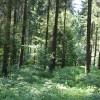 Ort einer Keltische Viereckschanze
