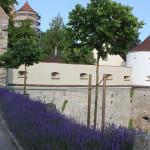 Wehrmauern Schloss Erbach Donau