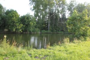 011 Donau hinter Munderkingen