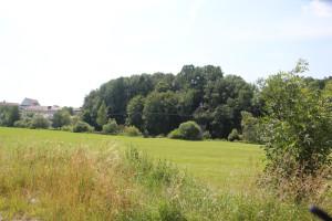 016 Natur Donautal