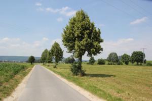 032 Alleenweg Donau Radweg
