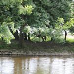 033 Donau Riedlingen