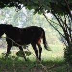 034 Pferde in Riedlingen