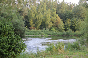 039 Donau Fluss