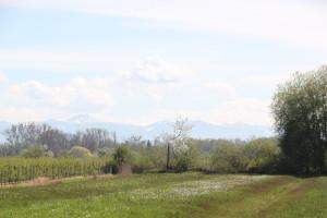 Alpen im Hintergrund des Naturschutzgebiet Eriskircher Ried