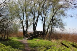 Aussichtsplattform Naturschutzgebiet Eriskircher Ried
