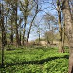Baeume Naturschutzgebiet Eriskircher Ried