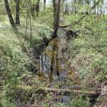 Entwaesserungsgraben Naturschutzgebiet Eriskircher Ried