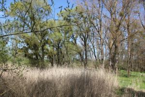 Flora Naturschutzgebiet Eriskircher Ried