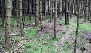 Innerhalb Viereckschanze Tannheim