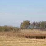 Riedwiese Naturschutzgebiet Eriskircher Ried
