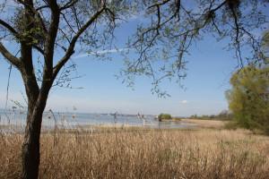 Schilf Naturschutzgebiet Eriskircher Ried