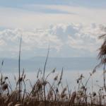Schilf am Bodensee Naturschutzgebiet Eriskircher Ried