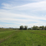 Streuwiese Naturschutzgebiet Eriskircher Ried