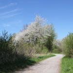 Weg durch Naturschutzgebiet Eriskircher Ried