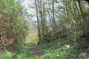 Wanderpfad zum Hohenbodman