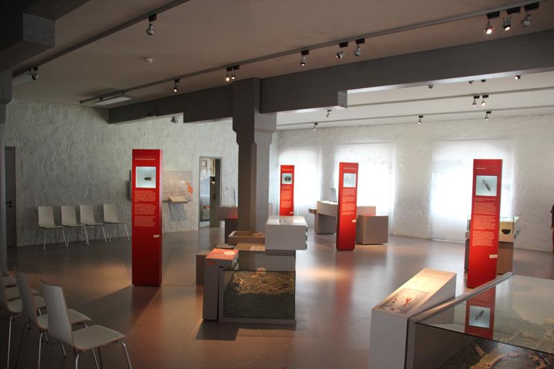 Ausstellungsraum Alamannenmuseum Weingarten