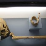 Knochenfund Alamannenmuseum Weingarten
