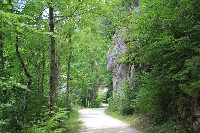 16 Donau-Radweg im Wald