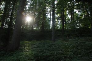 Sonne im Dickicht Jonistobel