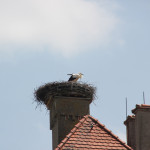 Storch Kloster Obermarchtal