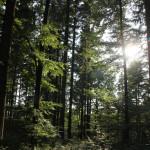 Wald im Jonistobel