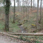 Bach im Sulpacher Altdorfer Wald