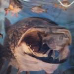 Fischwelt Bodensee