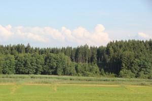 Roterweiher Allgaeu Kisslegg