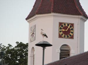 Storch Kirche Unterwaldhausen
