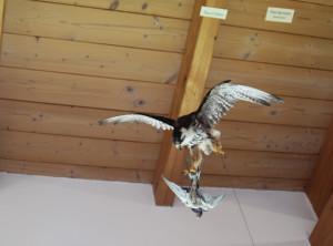 Vogelattacke