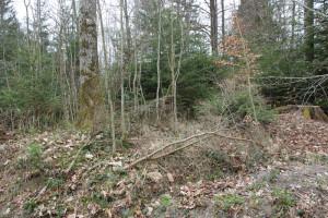 Wall der Viereckschanze Ost Altdorfer Wald