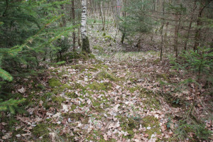 Wall und Graben westliche Wallanlage Kelten Sulpacher Wald