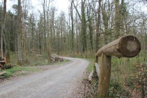 Wege im Altdorfer Wald