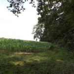 Feld vor Burgstall Kuemmerazhofen